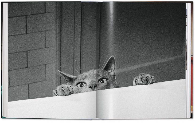 Foto einer Katze die über eine Tischkante schaut